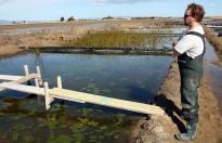 Vés a: La producció d'arròs al Delta podria caure entre un 10 i un 30% el 2100