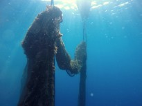 Vés a: Retiren una xarxa de pesca fantasma a la reserva marina de les Medes
