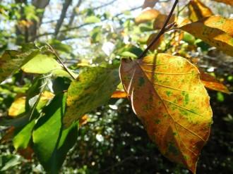 Les sequeres acumulades des del desembre passen factura als boscos catalans