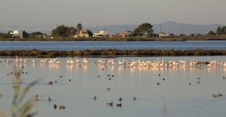 Vés a: El Delta de l'Ebre acull la 3a edició de l'únic festival d'ornitologia de Catalunya