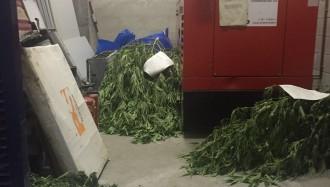 Queixes per la forta olor a marihuana a la comissaria de Mossos de Tremp