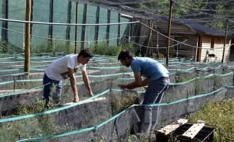 Rialp Treu Banya ja comercialitza els primers cargols criats al Pallars