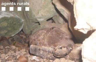 Vés a: Troben dues granades de mà actives de la Guerra Civil a l'Espluga Calba
