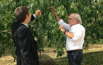 La pedregada de divendres va afectar 2.720 hectàrees de conreus del Segrià