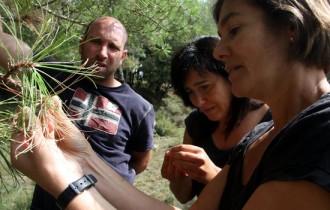 Vés a: Una nova plaga de processionària podria matar gran part dels boscos del Berguedà