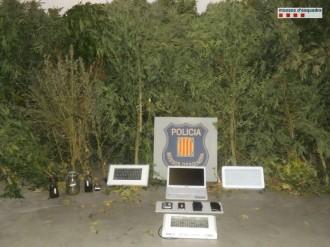 Detenen un veí de Solsona per cultivar 154 plantes de marihuana