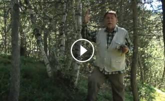 Els boscos de pi negre del Pallars Sobirà, a TV3