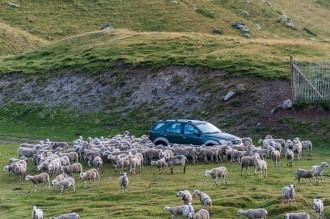 Vés a: Trànsit a la muntanya: la difícil convivència entre vehicles a motor, bicicletes i la resta d'usuaris