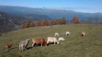 Vés a: Pasturant a quatre rodes