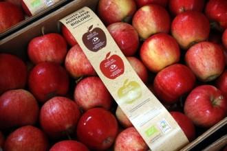 Vés a: Cent tones de poma ecològica de muntanya al Solsonès