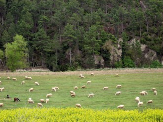 Territori de masies proposa descobrir la Ruta de les Guixeres dels Quadrells