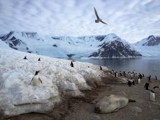 Vés a: Cocaïna, cafeïna i medicaments contaminen les aigües de l'Antàrtida