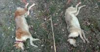 Vés a: Indignació al Bages i al Berguedà per l'assassinat cruel de dos gossos