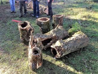 Vés a: La Fira del Tió de Solsona vendrà autèntics exemplars foradats d'un bosc de la comarca