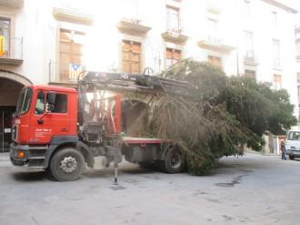 Ja tenim l'arbre de Nadal
