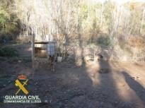 Vés a: Denuncien dos centres de cria i venda de gossos il·legal al Solsonès