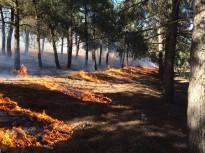 Els incendis controlats poden afavorir la diversitat de fauna i flora