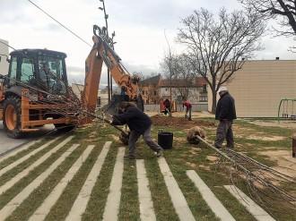 Solsona enllesteix la plantació d'una setantena d'arbres a diferents indrets