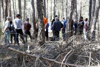 Finalitzen els treballs per conservar els boscos de pinassa del Solsonès amb l'objectiu d'evitar-ne la regressió