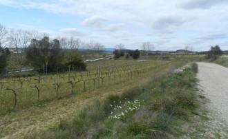 Vés a: #StopAgroparc planta cara al Grup Ametller al Penedès