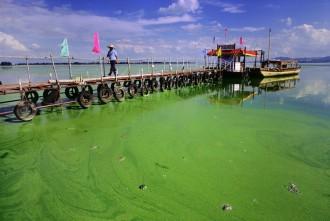 Vés a: L'excés de fòsfor amenaça els ecosistemes aquàtics arreu del món