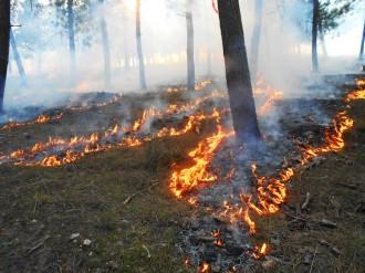 Vés a: Els incendis poden afavorir la diversitat de la fauna i la flora