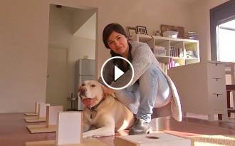 Vés a: El Clínic utilitza gossos per detectar el càncer de pulmó de forma precoç