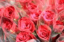 Vés a: Valentí Vilaginés, el Sant Jordi solsoní