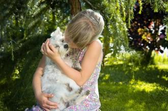 Vés a: Els consells dels veterinaris per mitigar la por de les mascotes als petards