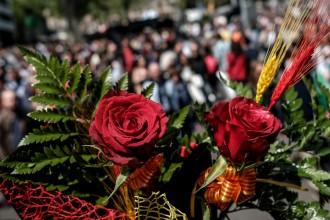 Vés a: Els floristes mostren «satisfacció» per haver arribat als sis milions de roses venudes