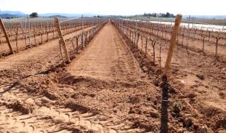 Vés a: JARC-COAG demana indemnitzacions per la vinya gelada a la Terra Alta