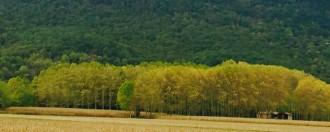 Vés a: Per adaptar Catalunya al canvi climàtic «cal reduir massa forestal»