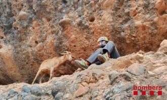 Els Bombers rescaten una cabra atrapada a la roca Foradada, a la Pobla de Segur