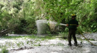 Campanya al Solsonès per reduir el risc d'incendis als boscos de ribera