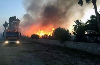 Vés a: Un incendi a Deltebre crema cinc hectàrees i queda a tocar d'una urbanització