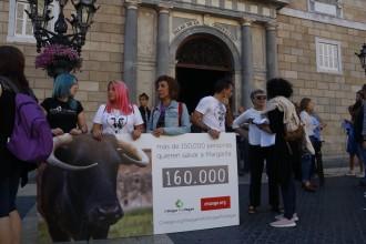 Vés a: Agricultura busca una solució al conflicte creat pel sacrifici de la vaca Margarita