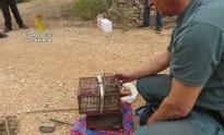 Vés a: Denunciats 3 caçadors furtius per capturar caderneres a l'Aldea