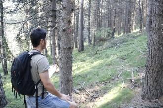 Vés a: El DARP treu a subhasta 76.065 tones de fusta dels boscos catalans
