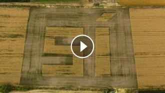 Vés a: VÍDEO L'ANC dibuixa un «sí» gegant en un camp de blat del Pla d'Urgell