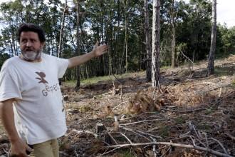 Vés a: Ipcena acusa Forestal Catalana d'abandonar unes 100 tones de fusta i alerta de risc d'incendis