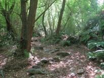 Vés a: S'enforteix el vincle científic forestal entre Catalunya i Canadà