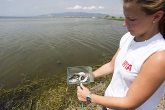 Vés a: Alliberen 2.000 exemplars de llissa i llobarro per a la repoblació de les aigües costaneres del delta de l'Ebre