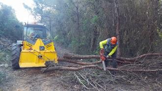 Vés a: Gestió forestal, una eina per rendibilitzar i preservar els boscos i evitar incendis