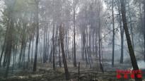 Vés a: Tivenys reclama les pistes forestals antiincendis a la serra de Cardó-Boix