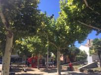 L'Ajuntament de Solsona recomana tancar finestres la matinada de dijous per la fumigació d'arbrat