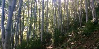 Vés a: Sant Hilari Sacalm impulsa els boscos terapèutics amb l'associació Sèlvans
