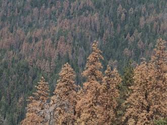 La sequera mata els arbres de set o de gana?