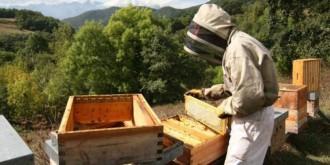 Vés a: Un detingut per enverinar 16 milions d'abelles al País Valencià
