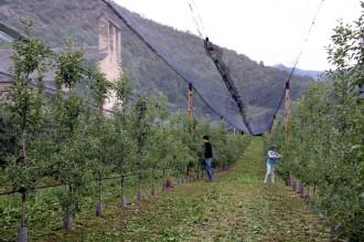 Productors de pomes ecològiques de muntanya creen la cooperativa Biolord