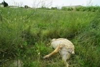 Vés a: Una veïna de l'Aldea s'enfronta a un any de presó per llençar dos gossos per la finestra